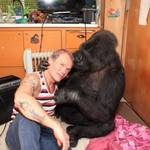 Watch Flea Jam Out with Koko the Gorilla